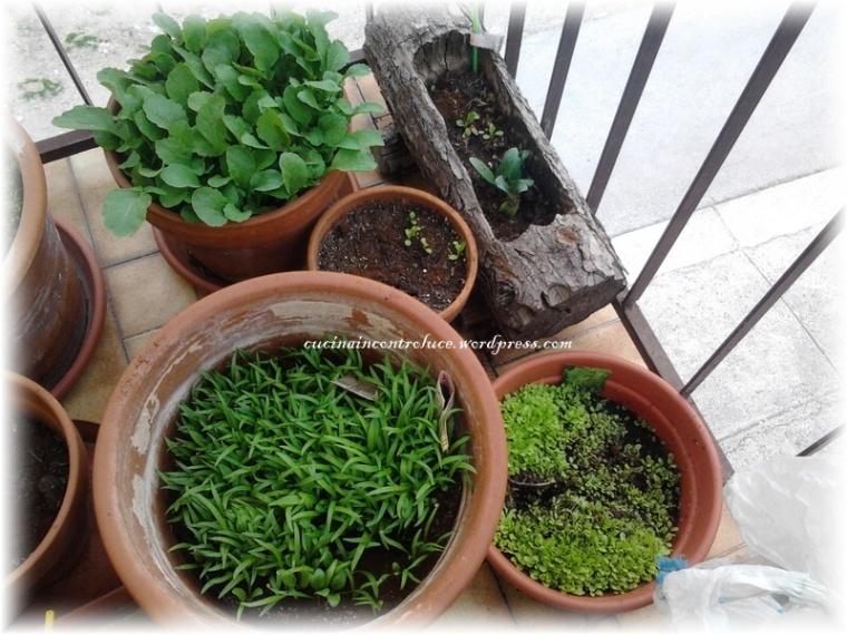 Spinaci, ravanelli e zucchine ancora in arrivo