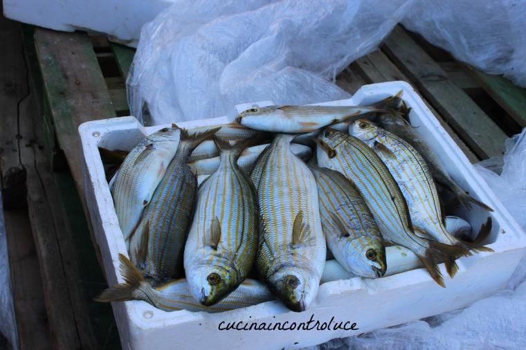 12)Sciacca,visita della cittadina,granita col pan caldo e acquisto pesse direttamente dai pescadori (59)